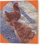 Red Hens 3 Wood Print