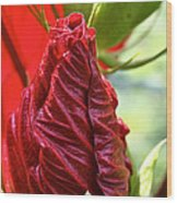 Red Hibiscus Torch Wood Print