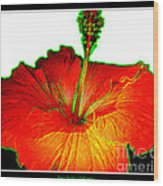 Red Hibiscus With Special Effects Wood Print