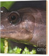 Red Hills Salamander Wood Print