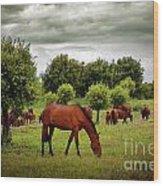 Red Horses Wood Print
