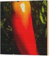 Red Hot Pepper Wood Print