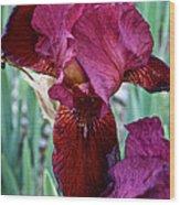 Red Iris Duo Wood Print