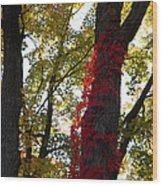 Red Ivy Climb Wood Print