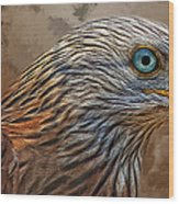 Red Kite - Featured In The Groups - Spectacular Artworks And Wildlife Wood Print