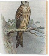Red Kite, Historical Artwork Wood Print