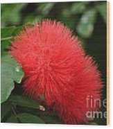 Red Koosh Ball Flowers Wood Print