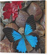 Red Leaf And Blue Butterfly Wood Print