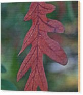 Red Leaf Hanging Wood Print