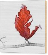 Red Leaf Of Autumn On White Wood Print