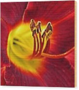 Red Lily Center 3 Wood Print