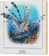Red Lionfish Wood Print