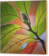 Red Magnolia Leaves With Bud Wood Print