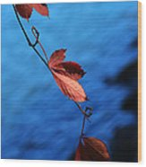 Red Maple Leaves Wood Print by Paul Ge