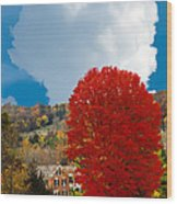 Red Maple White Cloud Wood Print