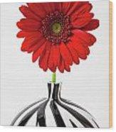 Red Mum In Striped Vase Wood Print