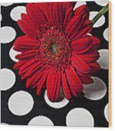 Red Mum With White Spots Wood Print