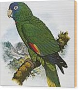 Red-necked Amazon Parrot Wood Print