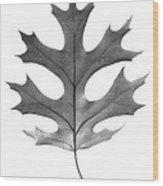 Red Oak Leaf Wood Print