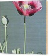 Red Opium Poppy Wood Print