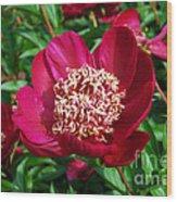 Red Peony Flowers Series 2 Wood Print