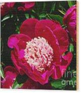Red Peony Flowers Series 3 Wood Print