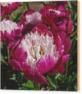 Red Peony Flowers Series 4 Wood Print