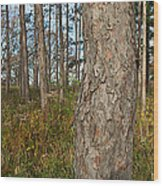 Red Pine Forest Wood Print