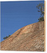 Red Pine Tree Wood Print by Ted Kinsman