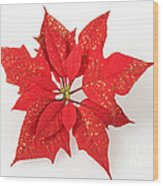 Red Poinsettia Flower Wood Print