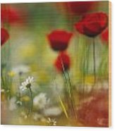 Red Poppies And Small Daisies Bloom Wood Print