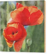 Red Poppies In Sunlight Wood Print