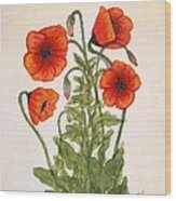 Red Poppies Watercolor Painting Wood Print