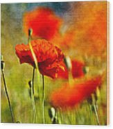 Red Poppy Flowers 01 Wood Print