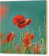 Red Poppy Flowers 06 Wood Print