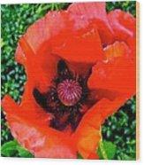 Red Poppy Wood Print