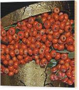 Red Pyracantha Berries Wood Print