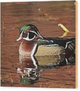 Red Reflection Of A Wood Duck Wood Print