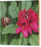 Red Rhododendron Blossom Wood Print