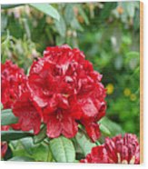 Red Rhododendron Floral Art Prints Rhodies Wood Print