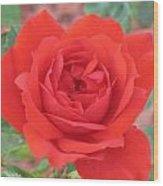 Red Rose 2  Wood Print