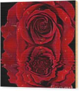 Red Rose Dew Wood Print