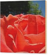 Red Rose Flower Bright Colorful Vivid Red Floral Rose Wood Print
