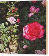 Red Rose In The Market Wood Print