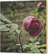 Red Rose In Water Drops Wood Print