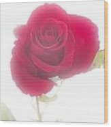 Red Rose Isolated On White Fog Wood Print by M K  Miller