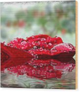 Red Rose Reflections Wood Print