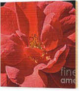 Red Rose Summer Wood Print