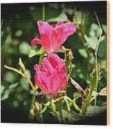 Red Rose Vignette Wood Print