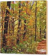 Red Run Trail Wood Print by Ed Smith
